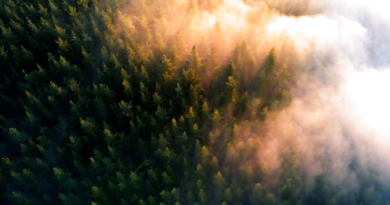 Presentamos 'Un pueblo, una acción por la biodiversidad'
